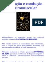 Aula  - Excitação e Condução neuromuscular - aula 1