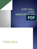 1.&2. Trachea
