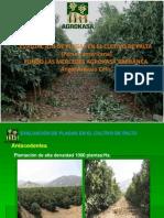 EVALUACIÓN DE PALTO