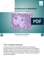 Tema 11. Metabolismo Del Glucogeno