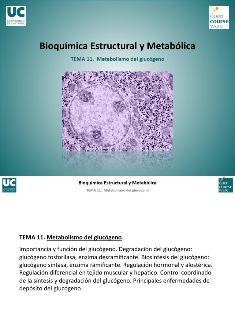 Prácticas para metabolismo de los lipidos resumen