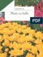 116136055 Gradinarit in Orice Anotimp 8 Plante Cu Bulbi