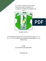 ACTIVIDADES REALIZADAS EN EL CULTIVO DE PALMA AFRICANA (Elaeis guineensis Jacq.) EN LA EMPRESA DE INVERSIONES DE DESARROLLO S.A., EL ESTOR, IZABAL