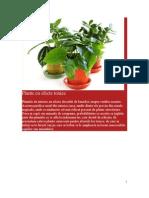Plante cu Efecte Toxice