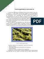 Cinetica dezvoltarii microorganismelor.doc