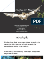 EcolocacaoemMorcegos.ppt