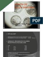 TRANSFERENCIA DE EMBRIONES EN BRAHMAN 4.pdf
