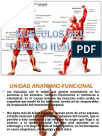 MUSCULOS.pptx