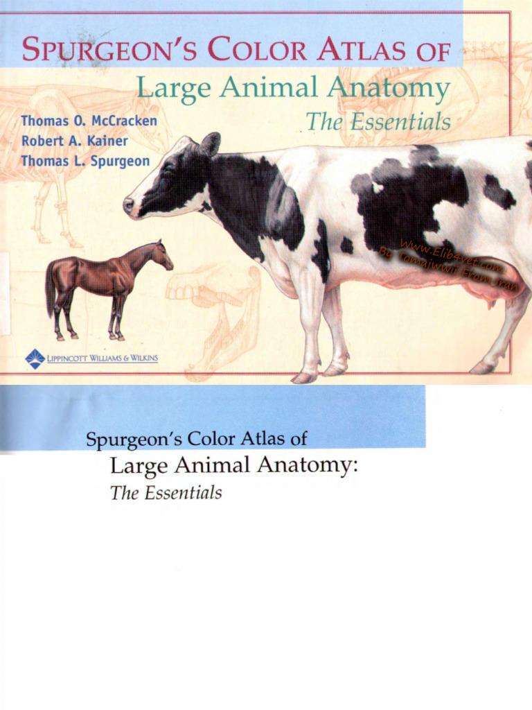 Spurgeons Color Atlas Of Large Animal Anatomy The Essentials
