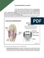 08 - Musculos Abdominales y Lumbares