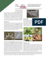 brochureno12.pdf