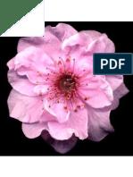El Haikú la poesía japonesa más sencilla de la poesía universal  Mtra Tokiyo Tanaka.pdf