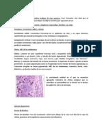 Gastritis crónica.docx
