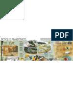 Bosques Amazonicos Info