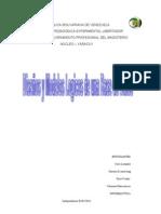 base de dato.doc2 (2).doc