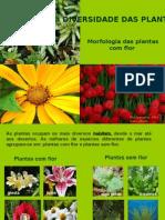 diversidadedasplantas-090301065842-phpapp02