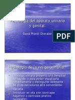 [Medicina Veterinaria Radiología Urogenital