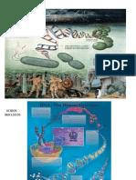 DNA-1.ppt