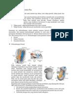 Embriologi Sistem Genitalia Pria Makalah