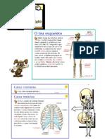 esqueleto.doc