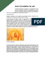 Sistemul Circulator La Om