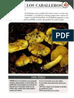 42220136-Tricholoma-equestre.pdf