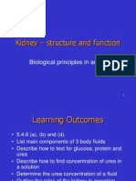 Kidney Structure and Function