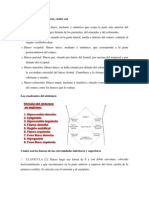 Huesos de la cabeza (Autoguardado)1.docx