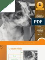 revista fogaus 2 de dic.pdf