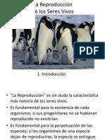 REPRODUCCION 1.pptx