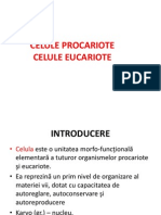 Celule procariote si eucariote