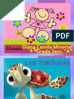 Las Tortugas Exposicion
