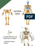 2 Sistema Osteo-Articular (1)