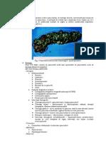 8.3 Pancreatita Acuta Partea I-A