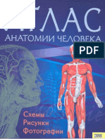 Atlas Anatom08