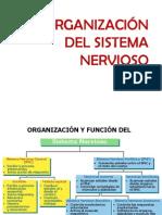 Fisio Organizacion Del Sistema Nervioso