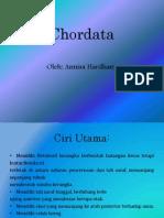Chordata.pptx