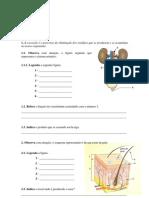 ficha avaliação 6º ano - sistema excretor e reprodutor.pdf