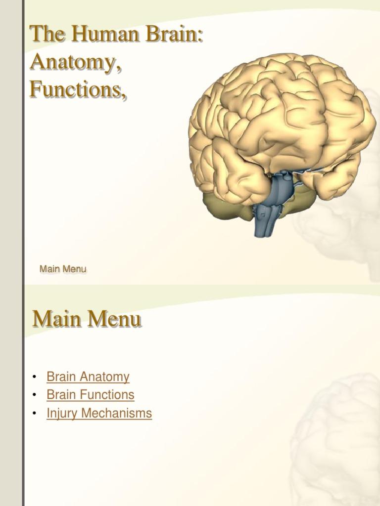 kuliah 7 otak | Brainstem | Neuron