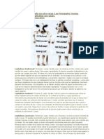 La economía explicada con dos vacas