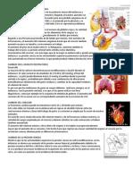 Cambios en El Aparato Circulatorio