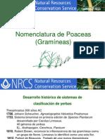 Nomenclatura_Poaceas