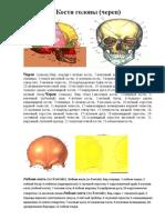 кости череп.docx