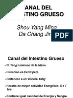 Canal Del Intestino Grueso
