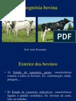 Ezoognósia bovino