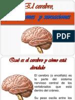 Exposicion El Cerebro1