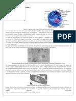 Procariotos x Eucariotos
