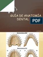 Guía de Anatomía dental Básica
