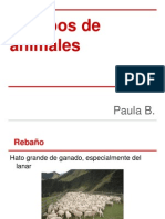 Grupos de animales.pptx