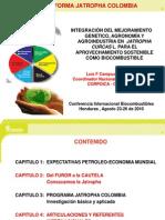 Plataforma jatropha en colombia.pdf
